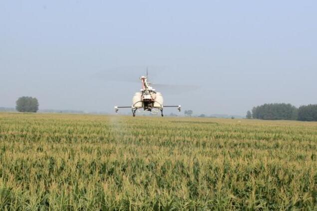 使用植保无人机进行打药防治病虫害。