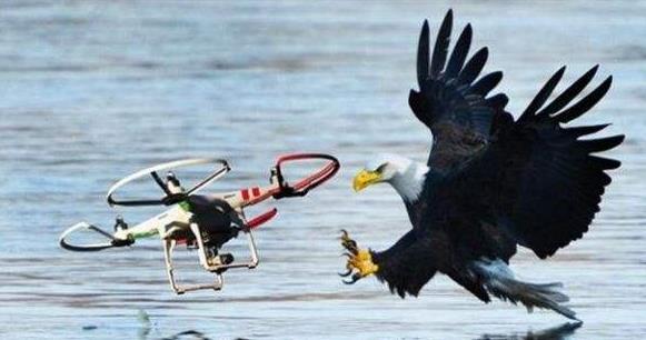 无人机动物追踪