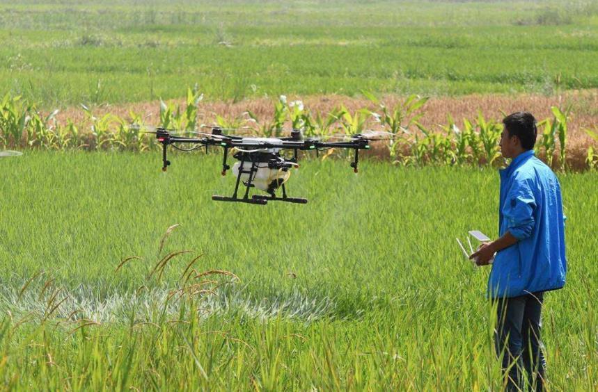 利用无人机对稻进行施药