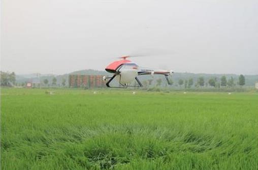 无人机喷药防治水稻病虫害