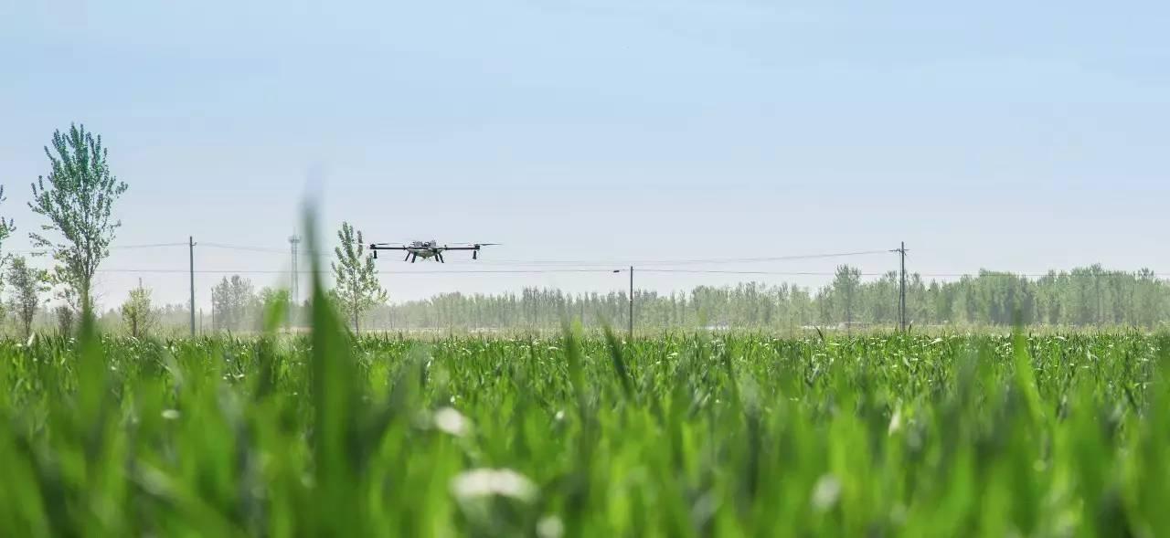 一架植保无人机,喷药效率是人工的百倍