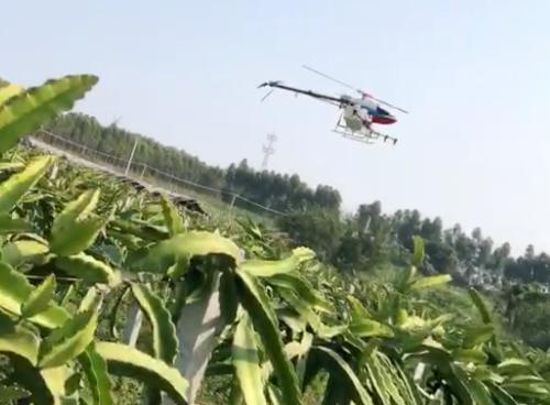 利用植保无人机防控火龙果病虫害