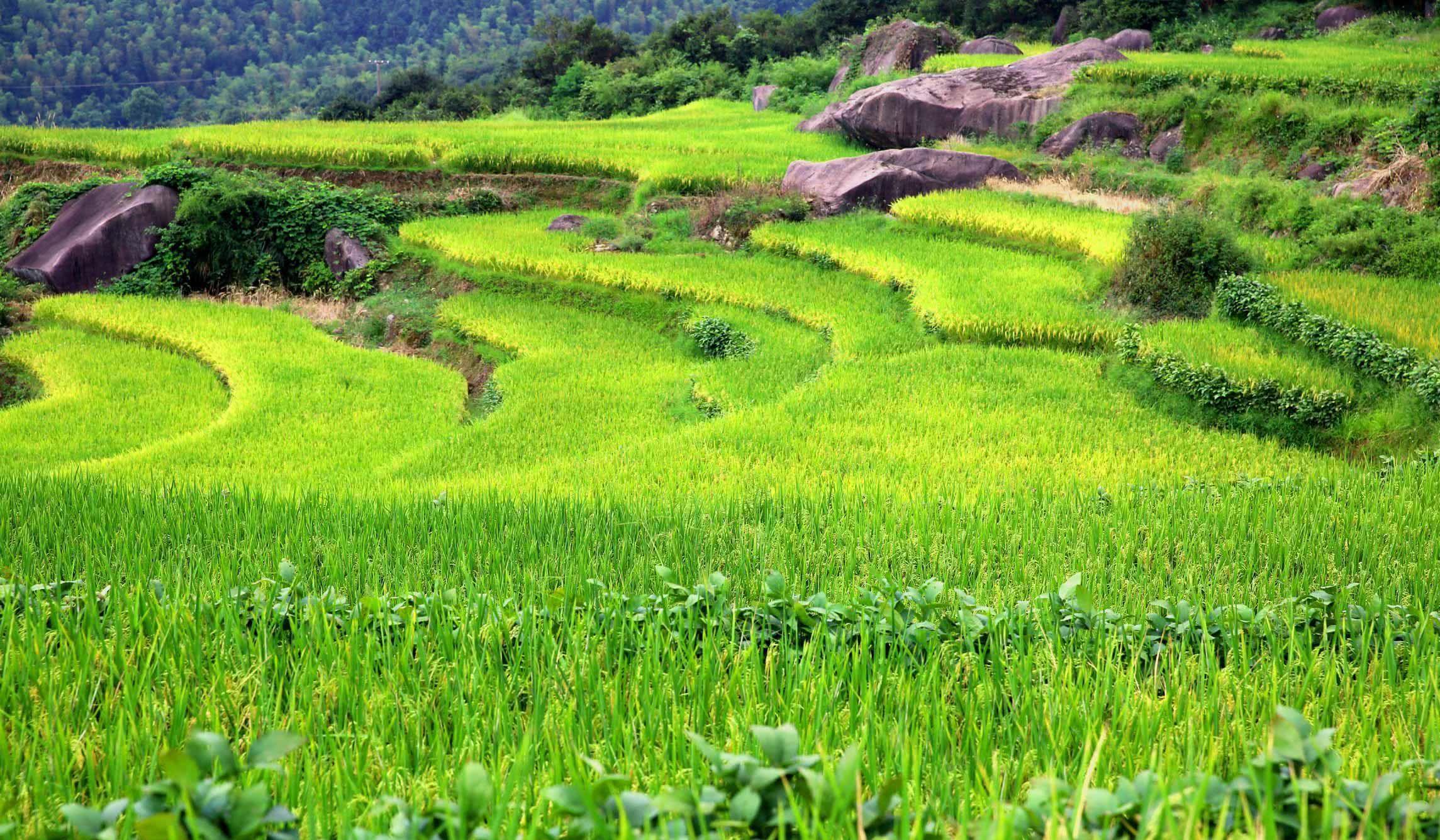 农用植保无人机打药行业前景如何