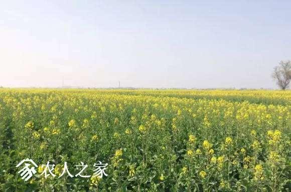 江西九江市大疆MG-1S油菜花飞防作业