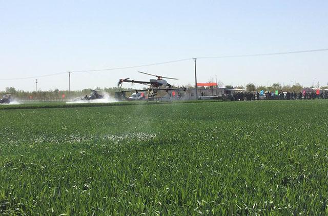 植保飞防喷洒小麦除草剂,这么做成本低效果好
