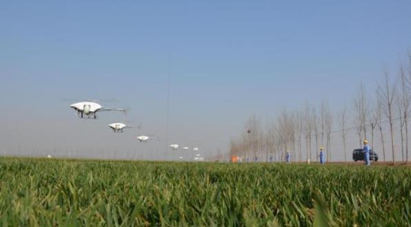 乐清无人机水稻田3分钟完成10多亩农田施药
