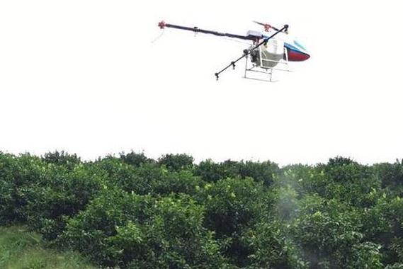 用无人机植保的柑橘,用药量比人工植保少了40%