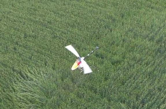 一架单旋翼植保无人机可载药17公斤,一个架次可飞防林地40亩左右,作业效率高