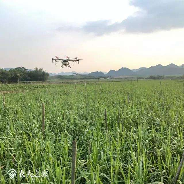 大疆打药无人机MG-1S复杂环境下甘蔗的飞防作业