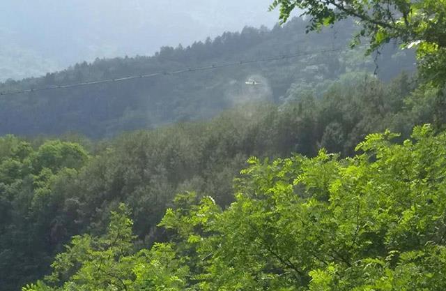 綦江区积极组织开展植保无人机喷洒药物防治松毛虫工作。