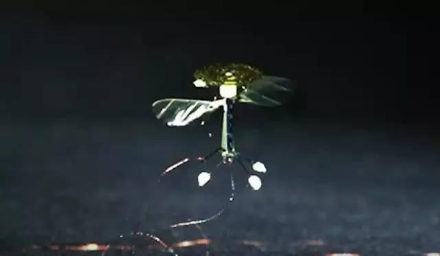 扑翼仿生飞行器发展进展插图22