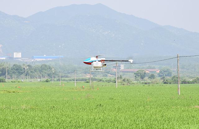 植保无人机携带17升农药在绿油油的水稻上空飞舞