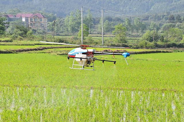 技术人员遥控着植保无人机在稻田中紧张有序的进行农药喷洒