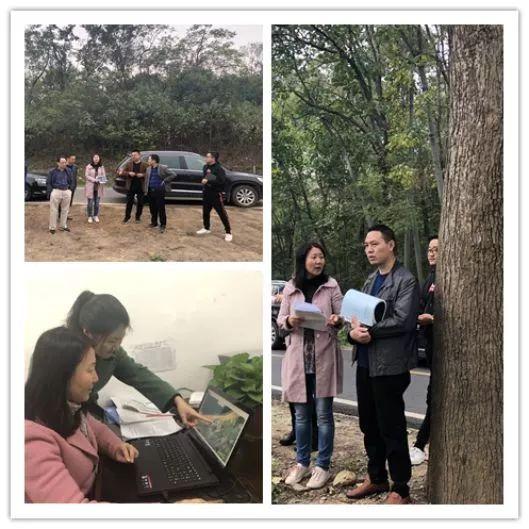 鄂州市审计局在某新区自然资源审计中,采取卫星云图大数据分析手段
