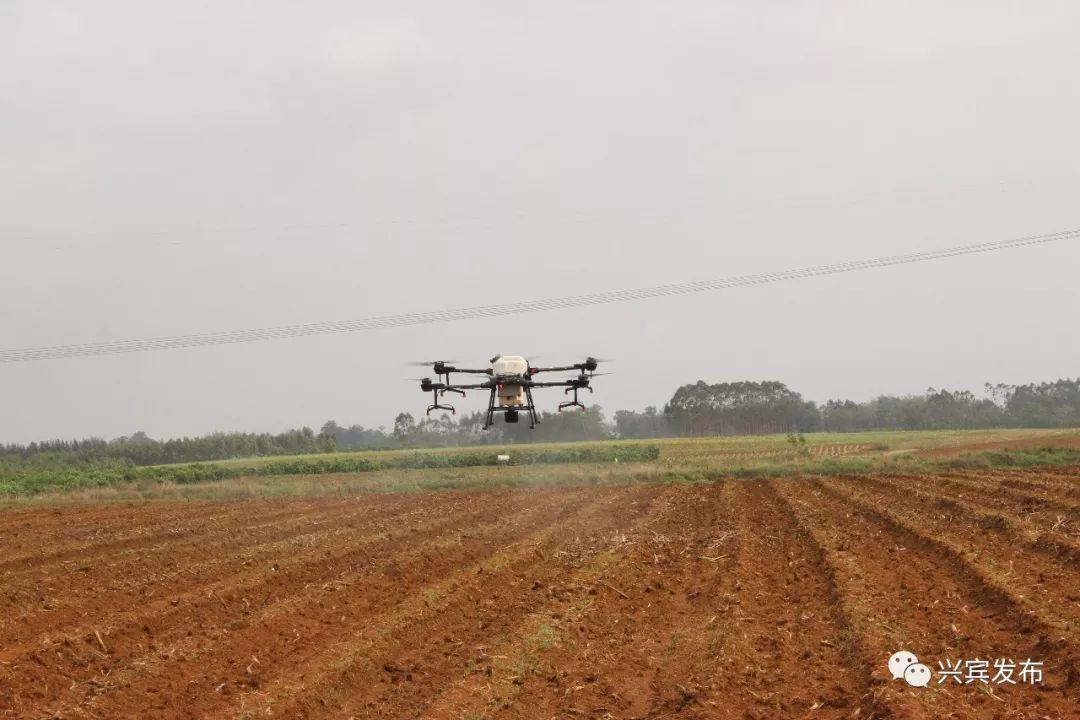 无人机甘蔗植保作业