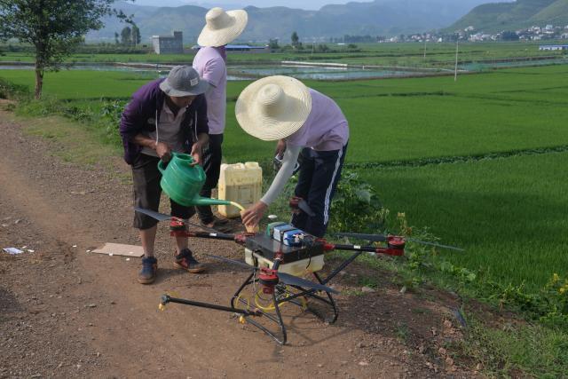 乐里村水稻防治现场