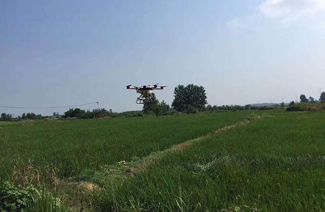 植保无人机在专业飞手熟练的操控下,对水稻田进行了农药喷洒,全自主飞行
