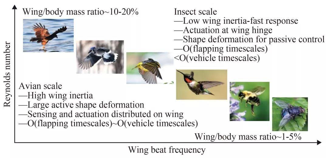 扑翼仿生飞行器发展进展插图54