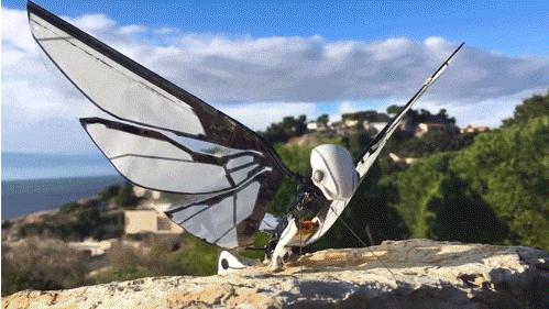 在飞行方式上,它不同于固定翼和旋翼式无人机,而是像昆虫一样,通过上下扇动翅膀