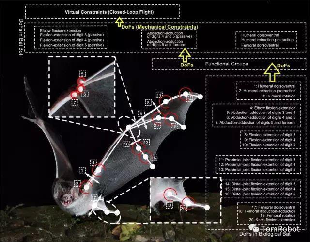 扑翼仿生飞行器发展进展插图28
