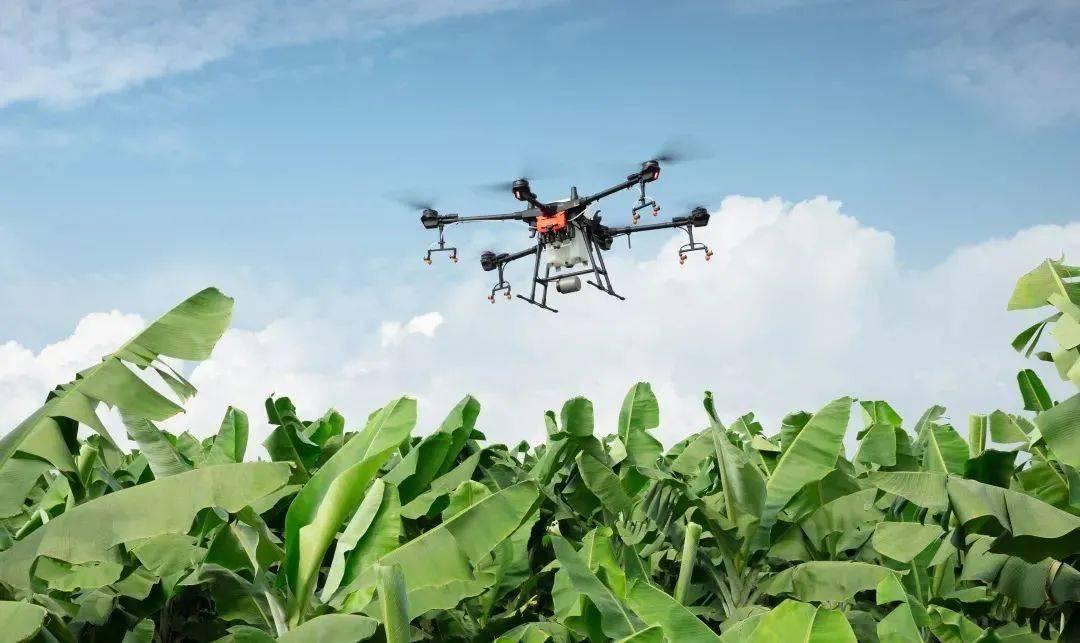 飞防飞控现场观摩会,大疆 T16 植保无人飞机针对绿橙、槟榔、橡胶林病虫害进行了作业实战演练。