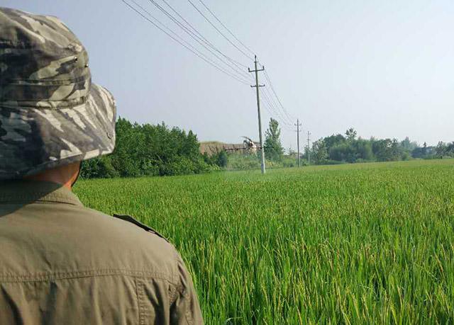利用植保无人机给水稻打药