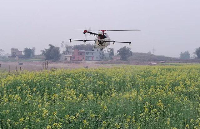 植保服务飞防技术员正对油菜进行无人机叶面肥喷洒