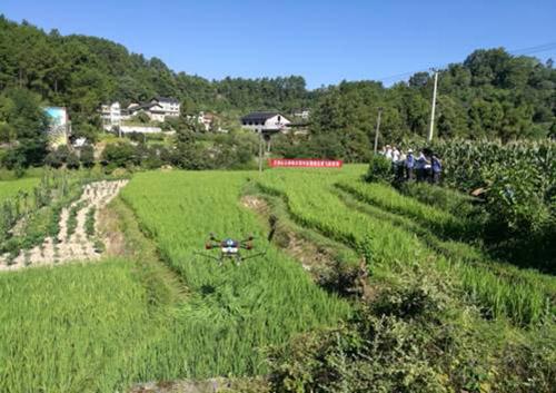 巴南区植保无人机防治水稻病虫害