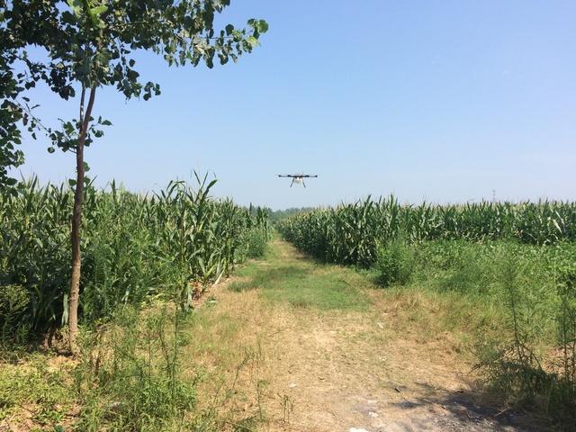 用无人机打农药,让不少农民尝到了效率高的甜头插图6