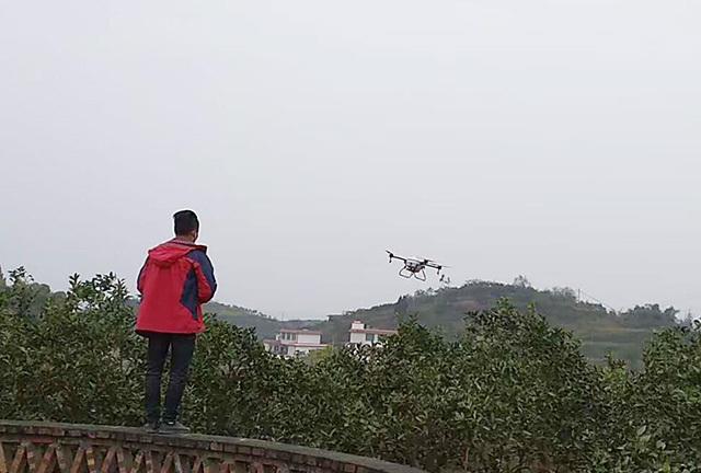 伴随着第一架植保无人机的轰鸣起飞,拉开了全区柑橘木虱统防统治序幕。