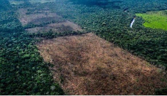 阿瓦比他们利用无人机发现了被毁坏的森林