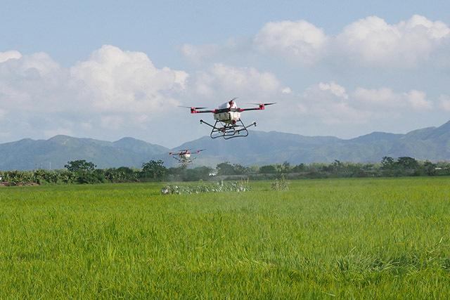 植保无人机在惠东县铁涌镇的一片稻田上空灵活自如地来回飞行