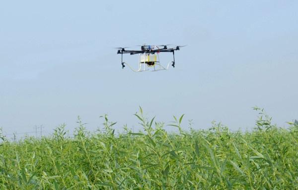用无人机打农药,没想到是这种结果