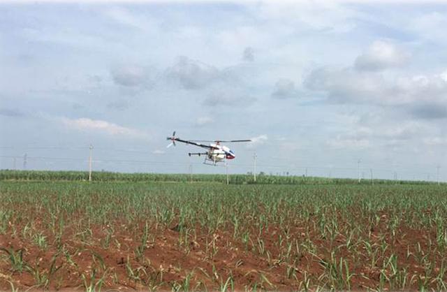 植保无人机甘蔗作业案例分享