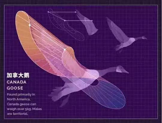 扑翼仿生飞行器发展进展插图62