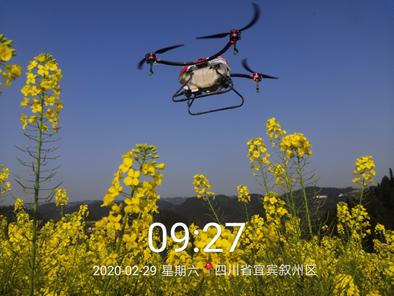 植保无人机M16开展油菜花作业。