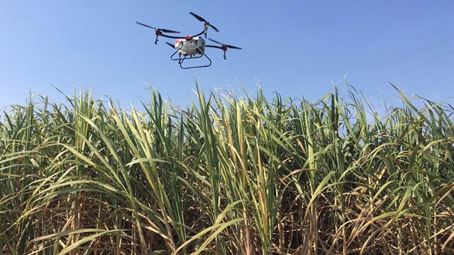 植保无人机甘蔗作业案例分享插图8
