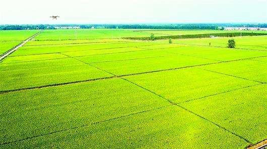 植保提高农药利用率也是亟待解决的问题