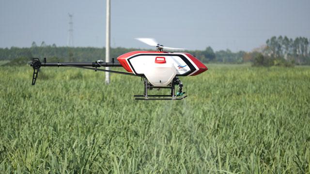 无人机下压风场是否可以给杂交水稻授粉