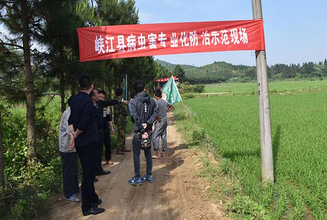 峡江县使用植保无人机开展水稻病虫统防统治