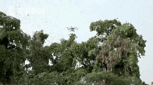 印度部署无人机阻止沙漠蝗虫蔓延