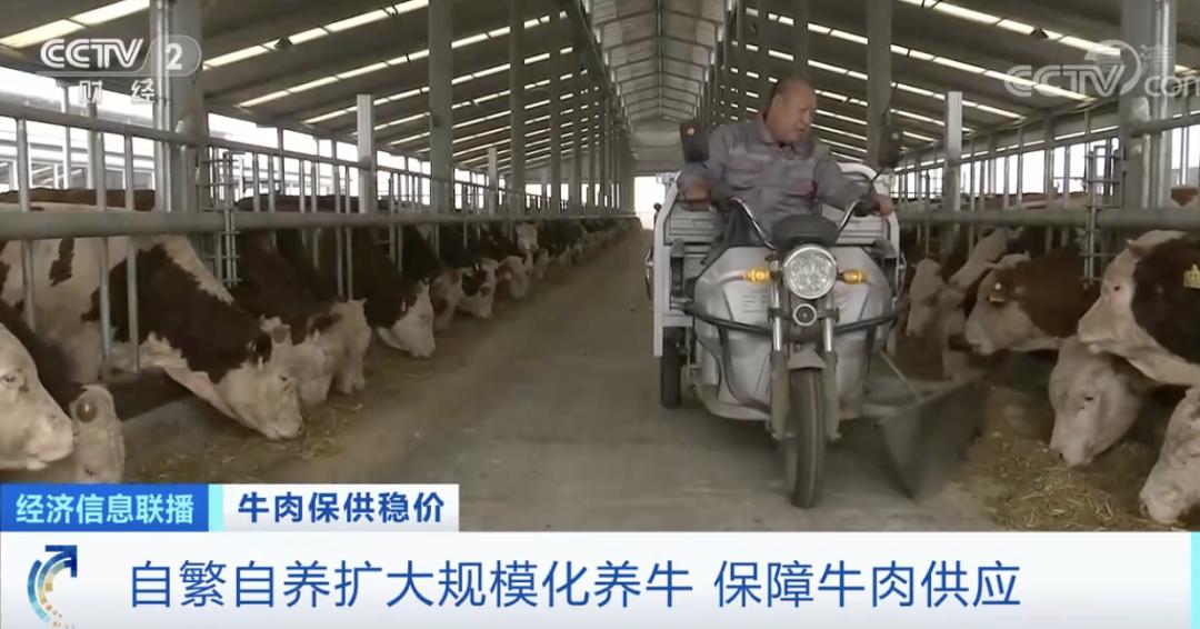 牛肉价格涨,销量也大涨!超市一天补货三次!一头牛卖到2.8万元,养牛户机会来了?