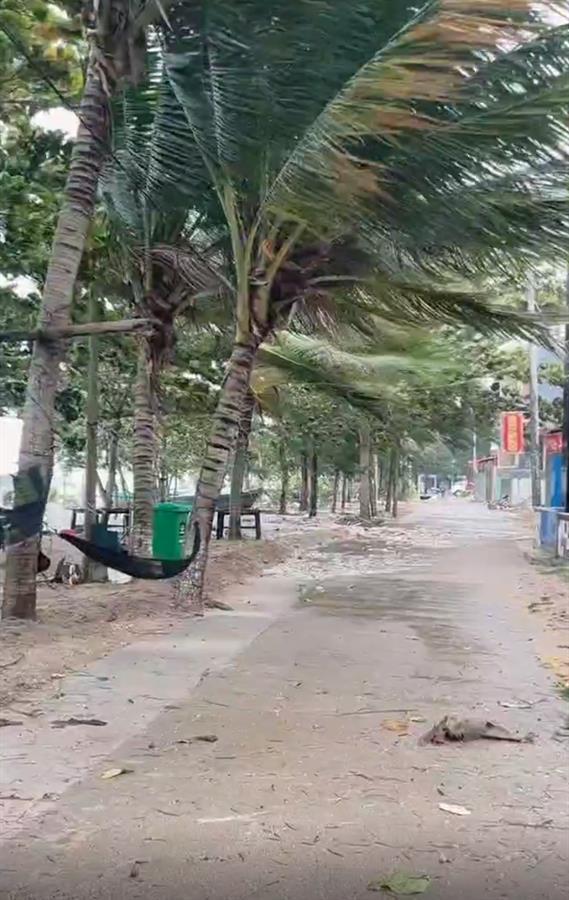 """台风""""圆规""""登陆海南琼海,多地海水倒灌,倒伏树木超3000棵"""